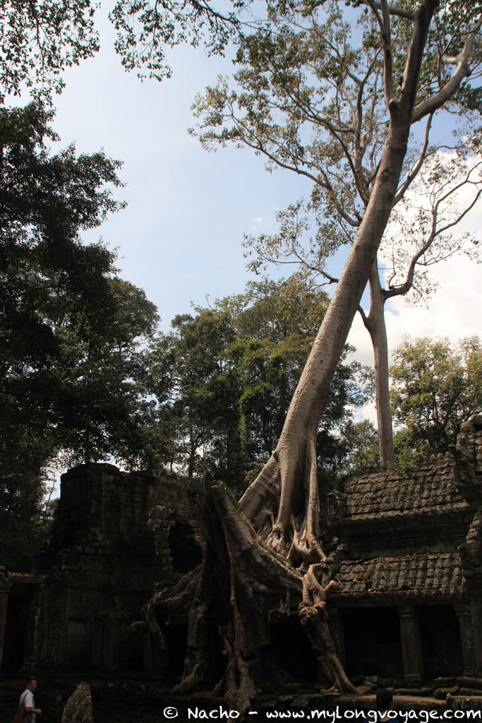 Temples of Angkor 75 44612416