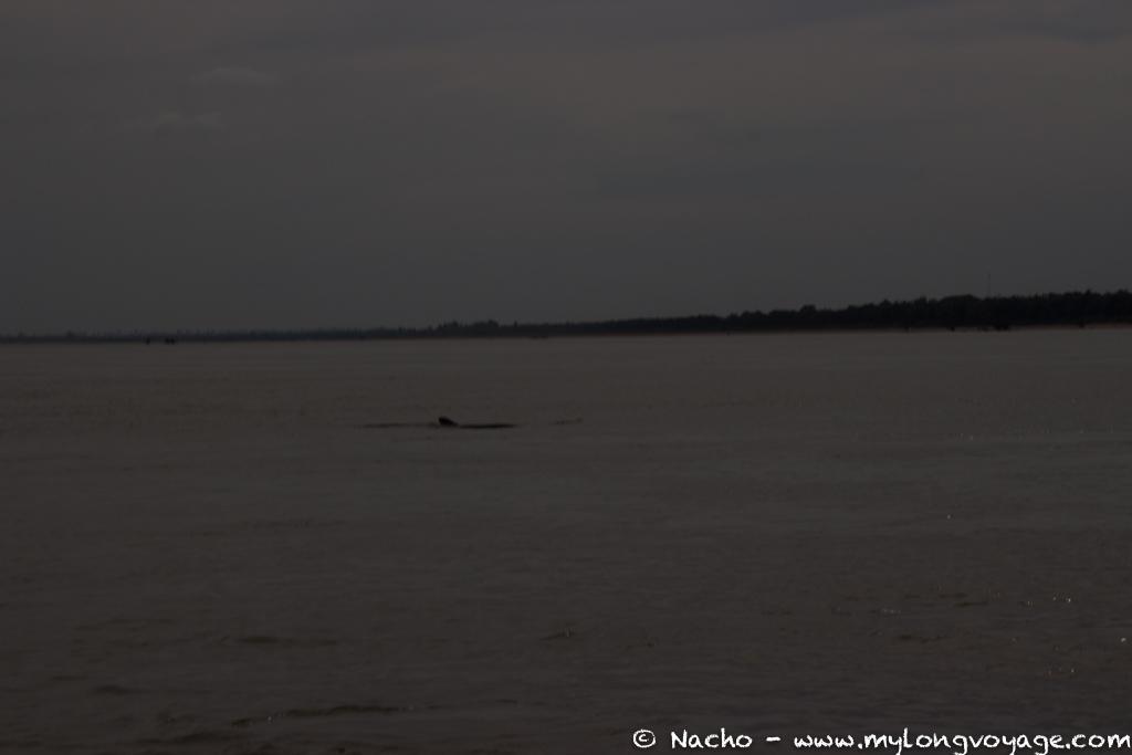 Kratie sunsets & dolphin spotting 21 48987264