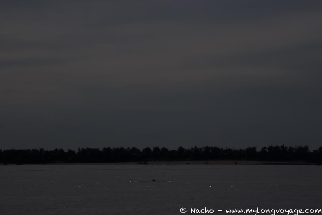 Kratie sunsets & dolphin spotting 24 49263744