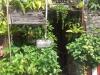 60 Penang and its food 11 143932