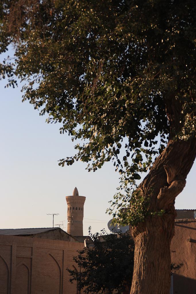 Bukhara 21 1366