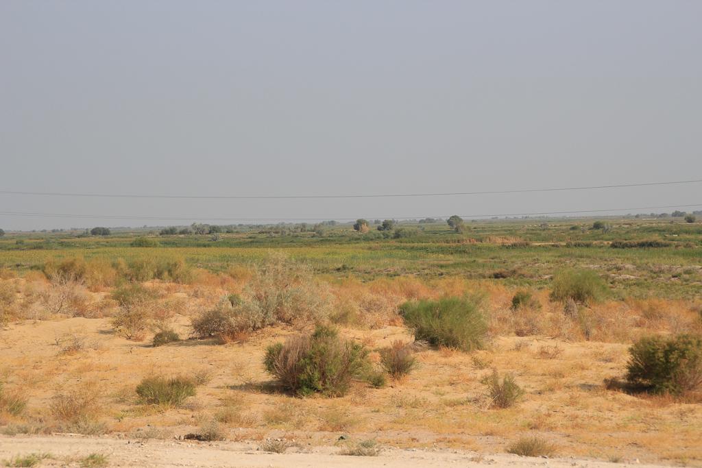 Desert roads of Uzbekistan 15 1179