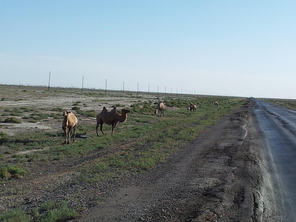 Kazakhstan 02 45